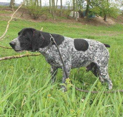 Rencontre chien saillie