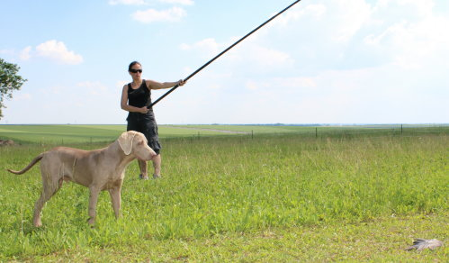 Rencontre animaux pour saillie