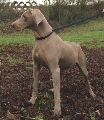 Elevage chien - agence matrimoniale canine - pension